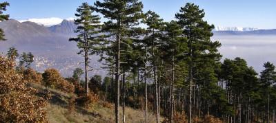 Monte Salviano