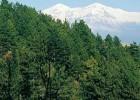 Opuscolo biodiversità